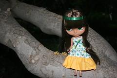 Sobre el árbol descansando II