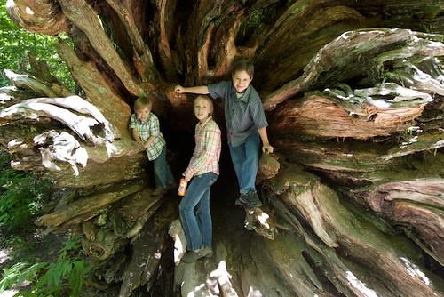 Grove of the Patriarchs -- Mt. Ranier