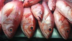 Pargo (carlosmaco) Tags: fish venezuela domingo pulpo mariscos mero carite laguaira pargo litoralcentral mosquero picua estadovargas mercadopescado