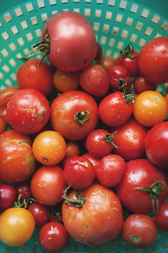 tomatoes1 copy