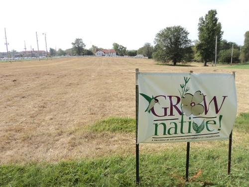 MCC-Longview plants native grasses