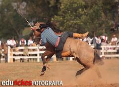 TOMBO 8 (Edu Rickes) Tags: horses caballos rodeo cavalos rs gauchos riograndedosul gaucho rodeio farrapos semanafarroupilha gineteada ginete fotógrafosbrasileiros edurickes fotógrafosgauchos culturagaucha corcovear fotógrafospelotas brazilianphotografers semanafarroupilhadepiratini fotografosportoalegre brazilrodeo