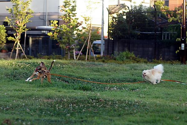 itagre terrier