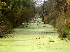 Waterway in Haskell-Baker Wetlands, Lawrence, Kansas (danjdavis) Tags: lawrence wetlands kansas waterway haskellbakerwetlands wakarusawetlands
