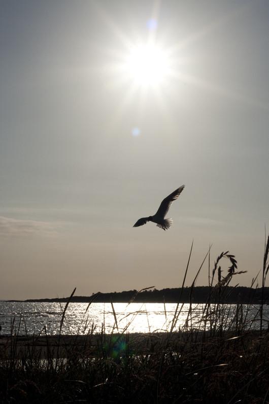 bird_3