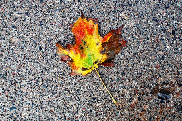 A leaf on wet ground.