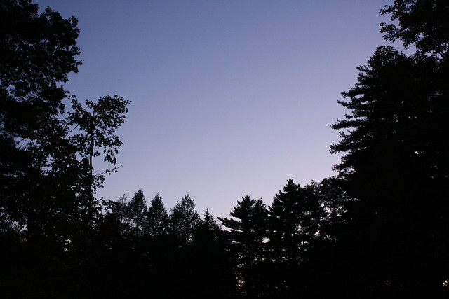 the night treeline