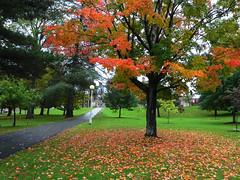 Autumn, The king of seasons (Explored) (Cna1_10) Tags: autumn orange canada color tree green fall campus season landscape leaf fredericton درخت پاییز برگ ملون