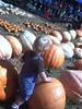 pumpkin 105