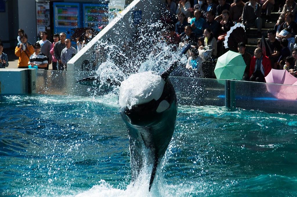 killer whale #25