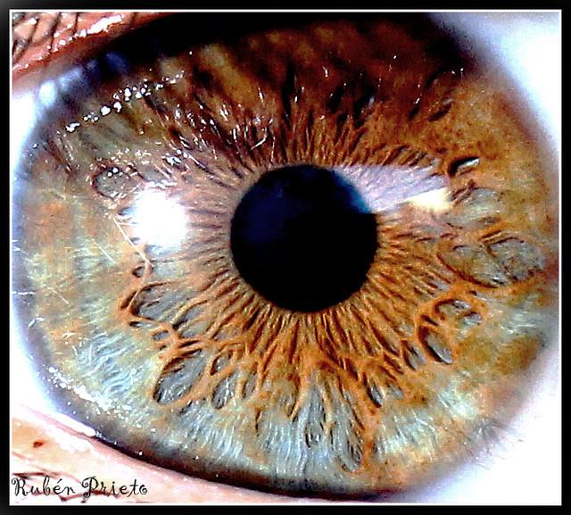 o meu iris