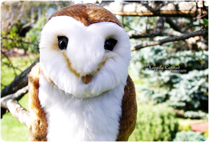 Athena, My Owl