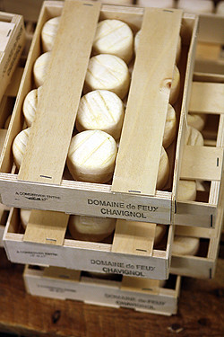 chavignol goat cheese
