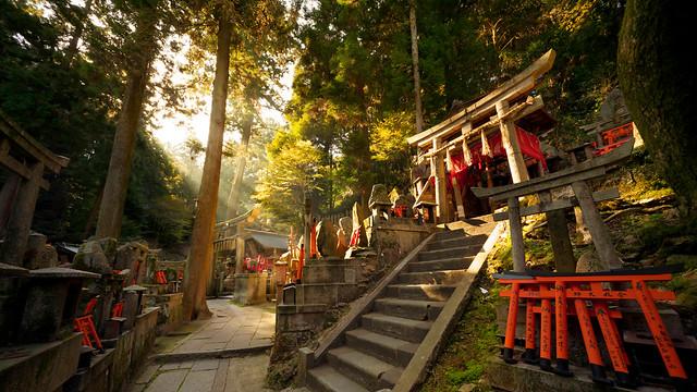 Fushimi Inari taisha forest : Kyoto, Japan / Japón