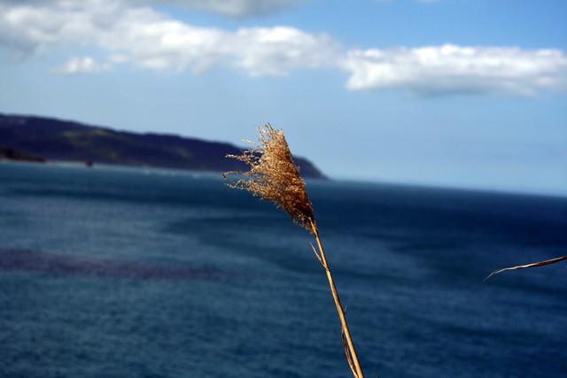 i.love.the.ocean.