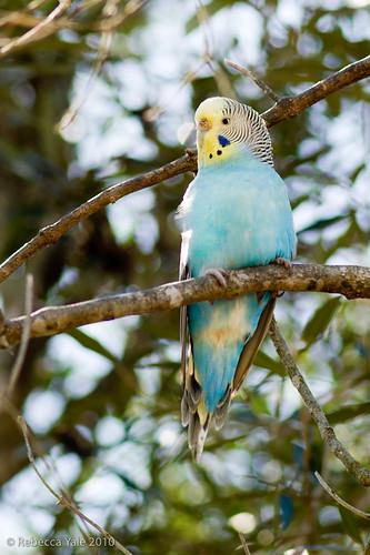 RYALE_African_Dawn_Birds_59