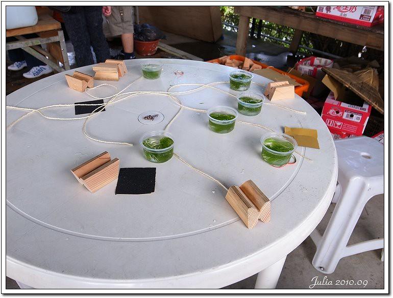 勝洋水草 (2)