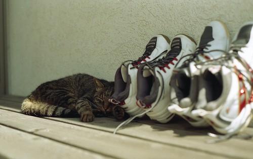 sleeping beside tennis shoes