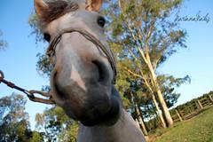 Olhar de cima... (Look - for Mare.) Tags: photo olhar foto campo rs cavalo gua baia gacho expresso crioulo photograohy gauchada passinho