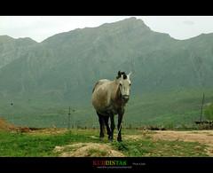 kurdistan (Kurdistan Photo ) Tags: love nature landscape collection loves kurdistan kurd naturesfinest blueribbonwinner abigfave platinumphoto aplusphoto flickrdiamond kurdiskaa kuristani kurdistan4all kurdistan2all kurdistan4ever excapture kurdphotography  kurdistan4all goldstaraward kurdene kurdistan2008 sefti kurdistan2006 flickraward kurdistan2009