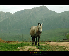 "kurdistan (Kurdistan Photo كوردستان) Tags: love nature landscape collection loves kurdistan kurd naturesfinest blueribbonwinner abigfave platinumphoto aplusphoto flickrdiamond kurdiskaa kuristani kurdistan4all kurdistan2all kurdistan4ever excapture kurdphotography كوردستان kurdistan4allكوردستان goldstaraward kurdene kurdistan2008 sefti kurdistan2006 ""flickraward"" kurdistan2009"