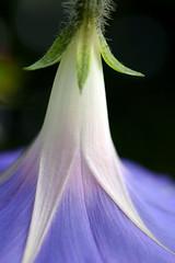 Flower (pierre1926) Tags: flowers flower canon flora 300d canon300d