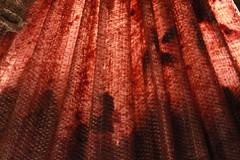 La Bunici (bortescristian) Tags: bortes cristian bortescristian cristianbortes autumn toamna 2010 september septembrie photo picture foto poza fotografie imagine image photography canon eos 500d rebel t1i kiss x3l digital slr poze fotografii imagini dumbraveni suceava bunici grandparents flowers flori flower floare macro closeup close up natura nature romania roumanie yard curte house casa