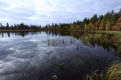 Svezia_ (silvano fabris) Tags: lake lago wildlife sweeden naturephotos wildlifephotography
