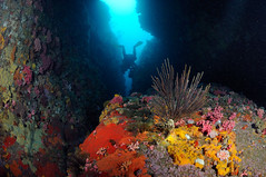 Atlantic (3) (jtresfon) Tags: southafrica nikon underwater dive scuba capetown houtbay rebreather d300 jeantresfon vulcanrock discracks