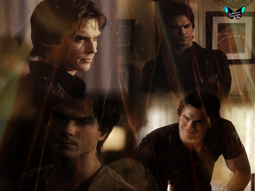 Vampire Diaries Wallpaper Damon