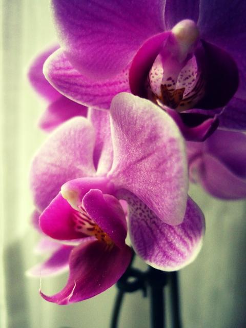 un' orchidea per ogni donna