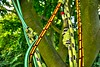Beech climb (10) (jcw1967) Tags: trees house tree climb rope 山 beech fagus harewood sylvatica abseil 毛 climbtree 绳子 子 绳 johnwaller shānmáojŭ 山毛榉 榉 shéngzi 攀登爬 pāndēngpá