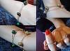 Pulseiras de bolinhas (omgbazar) Tags: moda bolinhas omg vendo infinito colar pulseira loja bazar ouro borboletas anel prata feminino acessórios bijux marfin marcassita