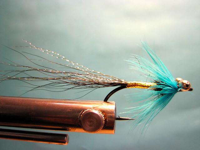 Jay Nicholas's  Chinook Salmon Blue Comet