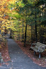 _MG_5150 (destiny_studios) Tags: autumn bench newhampshire letterboxing foliage