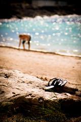 Glass Collector (@paulbVic) Tags: ocean beach water sunshine sand bokeh sandals driftwood bermuda bermudasand bermudacanuck pickingglass
