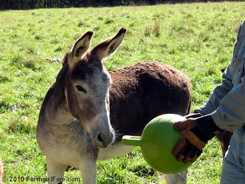 Donkey Ball 7