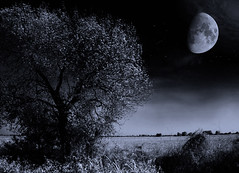 One night every thousand years / Una noche cada mil años (Claudio.Ar) Tags: bw moon santafe tree argentina night landscape sony dsc topf200 pampa h9 sirhenryandco awardtree claudioar claudiomufarrege phvalue bestcapturesaoi fleursetpaysages