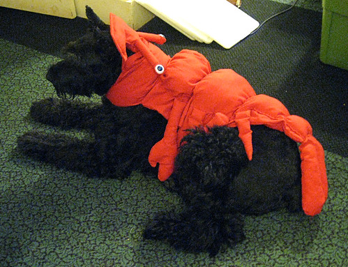 Lobster Dog 30