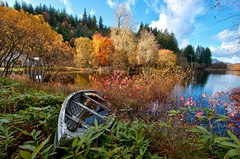 Autumn Delight (PeterYoung1.) Tags: uk autumn trees sunlight lake water forest canon woodland landscape scotland exposure flickr gallery colours ngc scenic scottish august scene loch 1022 ard lochard 50d