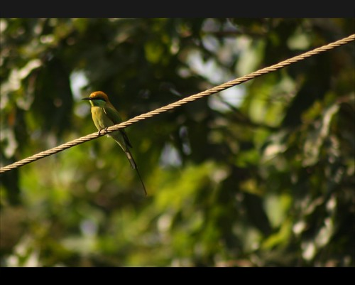 Enjoying the morning, Bird at Dandeli