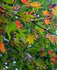 Vibrance (.Emmalee.) Tags: autumn trees red orange brown tree green fall nature leaves yellow leaf foliage