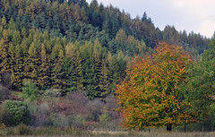 Galloway forest park (Mark McKie) Tags: tree grass pine forest scotland nikon spruce beech d90 gallowayforestpark wigtownshire nikond90 minnigaff wildgalloway
