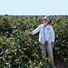 Frogmore+plantation