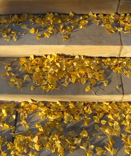Leaves on the stairs