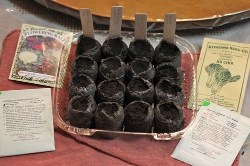 More Winter Veggies Sown