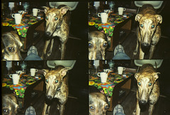 Fina & Lupita (Rodrigo Lomo) Tags: style perros doggy misticos