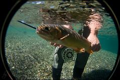 Underwater-Cutty_DSC_0020_cw