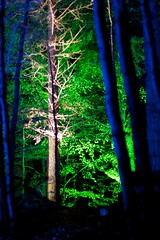 Enchanted Forest 1/45 (itmpa) Tags: wood trees light tree slr night forest canon dark scotland perthshire lit nophotoshop enchanted enchantedforest pitlochry unedited 30d faskally canon30d straightfromthecamera faskallywood lochdunmore lightingshow bigtreecountry tomparnell itmpa archhist