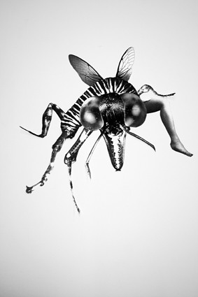 The Fly (illustration screen print) 2010.